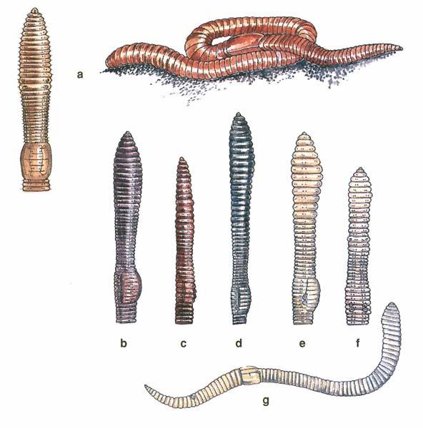 kerekférgek és férgek paraziták mászkálnak a bőr alatt